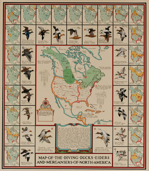 Map Of the Diving Ducks Eiders and Mergansers of North America