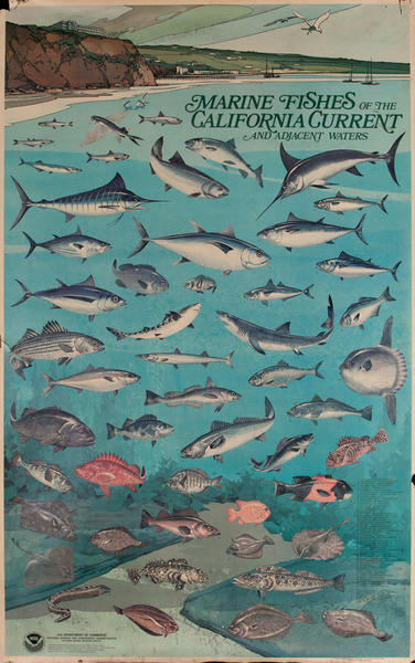 NOAA Marine Fishes of The California Current Poster, US Department of Commerce National Oceanic and Atmospheric Admninstration Poster