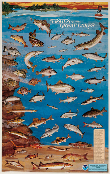 NOAA Fishes of the Great Lakes, Original US Department of Commerce National Oceanic and Atmospheric Admninstration Poster