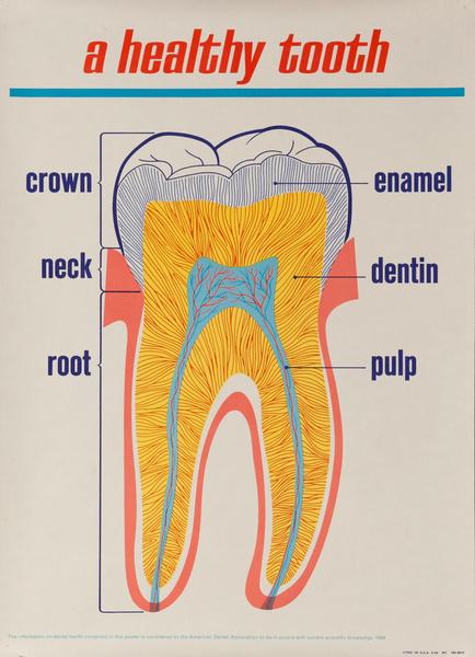 A Healthy Tooth, Original ADA American Dental Association Poster