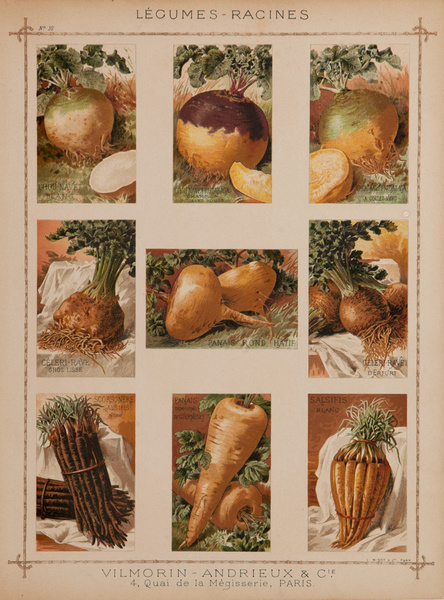 Vilmorin Andrieux & Cie Original French Produce Print, Legumes Racines, Root Vegetables
