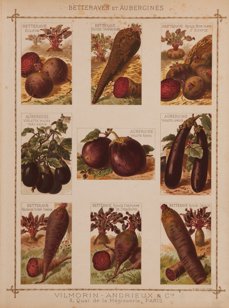Vilmorin Andrieux & Cie Original French Produce Print, Betteraves et Aubergines, Beets and Eggplants