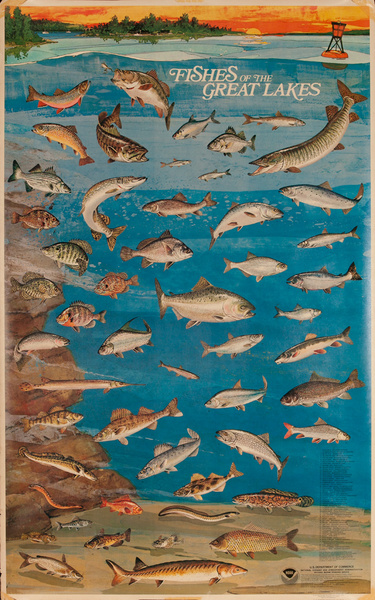 NOAA Fishes of the Great Lakes, Original US Department of Commerce National Oceanic and Atmospheric Admninstration Poster, large size