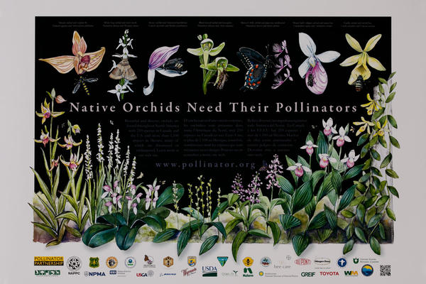 Native Orchids Need Their Pollinators, Original USDA Poster