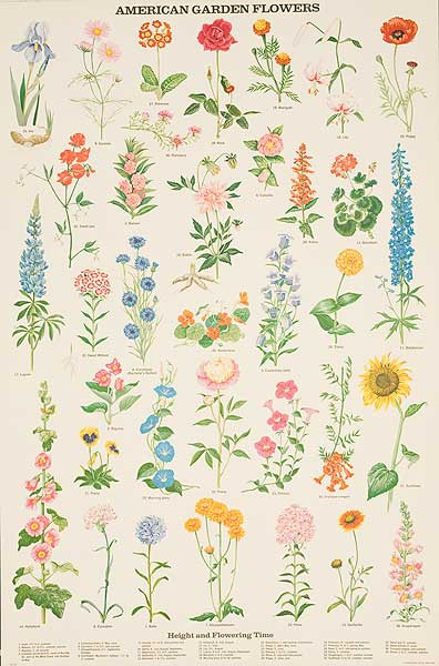 American Garden Flowers Original Education Poster
