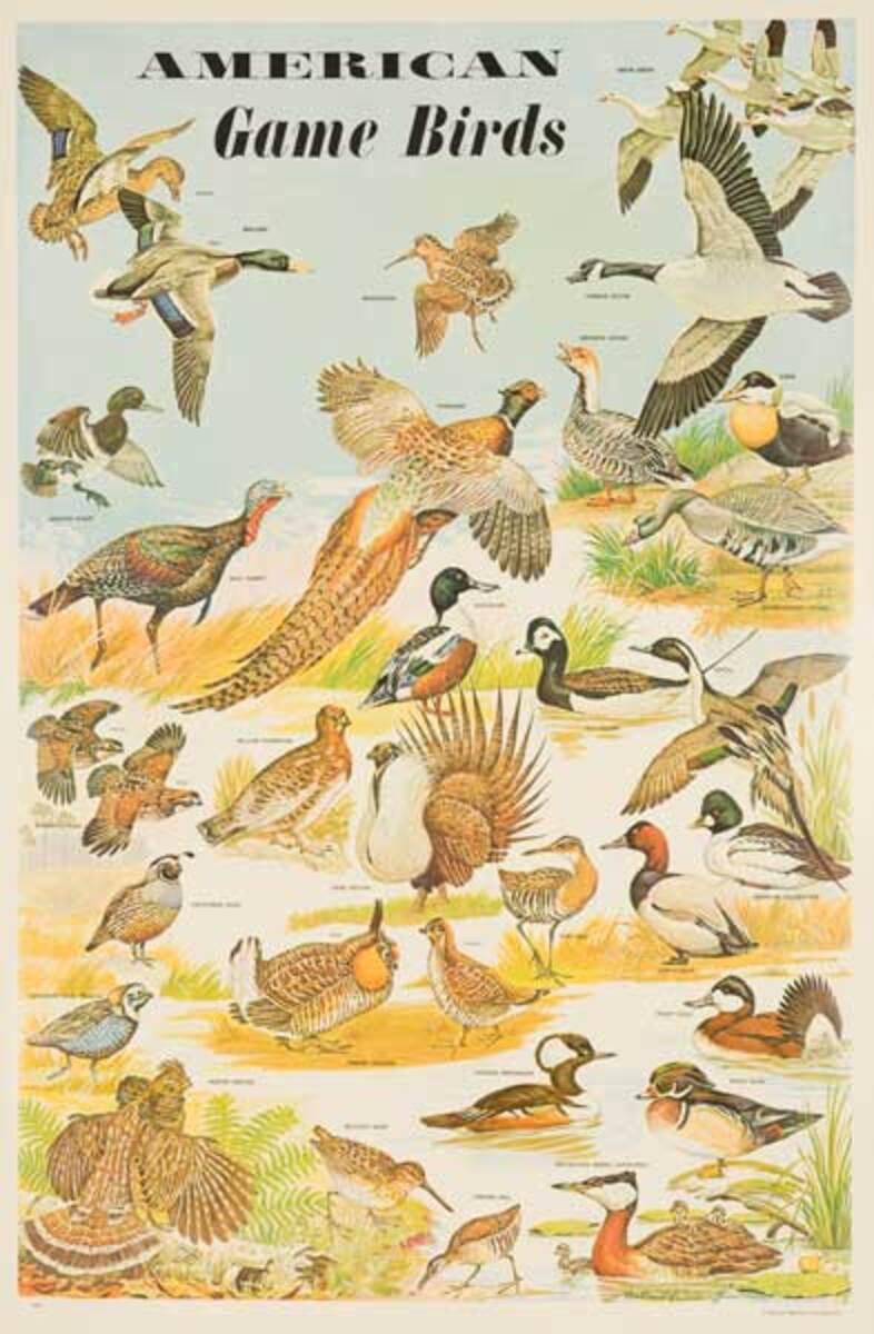 American Game Birds Original Education Poster