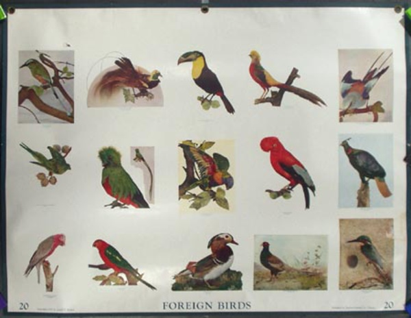 Original School Educational Vintage Poster #20 Foreign Birds