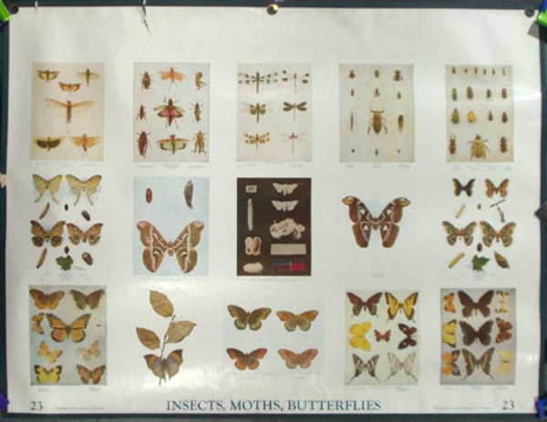 Original School Educational Vintage Poster #23 Insects, Moths, Butterflies