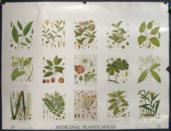 Original School Educational Vintage Poster #25 Medicinal Plants, Spices