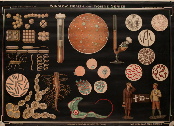 Winslow Health and Hygiene Series Poster, W13 Germs and Germ Diseases