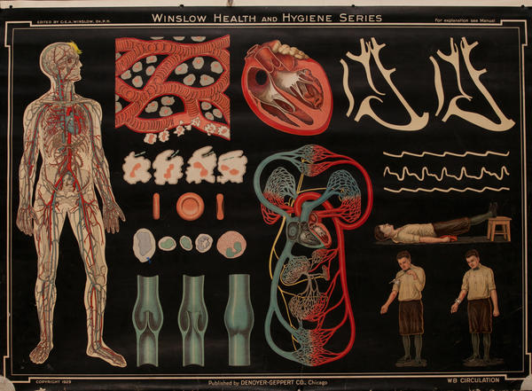 Winslow Health and Hygiene Series Poster, W8 Circulation