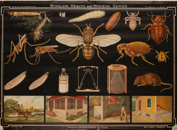 Winslow Health and Hygiene Series Poster, W15 Insect Enemies