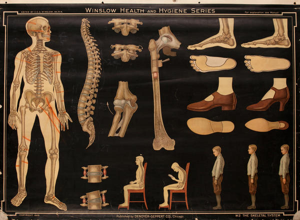 Winslow Health and Hygiene Series Poster, W2 The Skeletal System