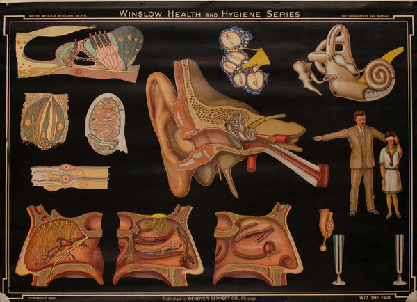 Winslow Health and Hygiene Series Poster, W12 The Ear