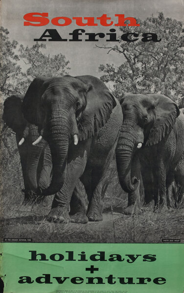 South Africa Holidays + Adventure Elephants