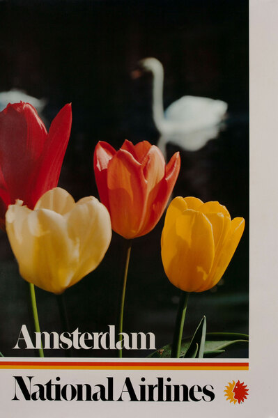 National Airlines Amsterdam Tulips