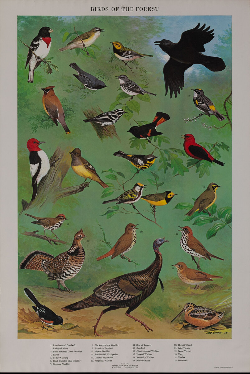 Birds of the Forest - Pennsylvania Game Commision Wildlife Poster