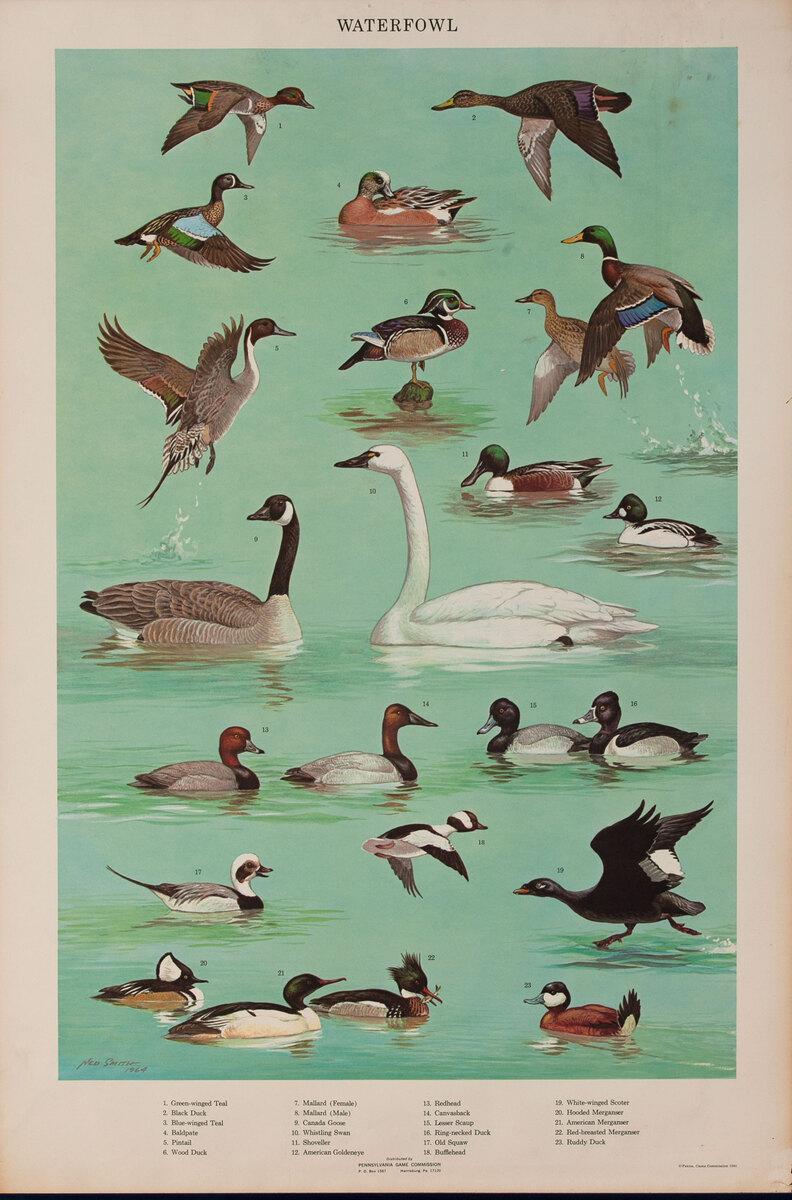 Waterfowl - Pennsylvania Game Commision Wildlife Poster