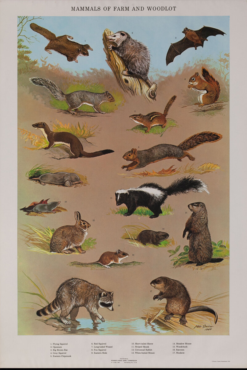 Mammals of Farm and Woodlot - Pennsylvania Game Commision Wildlife Poster