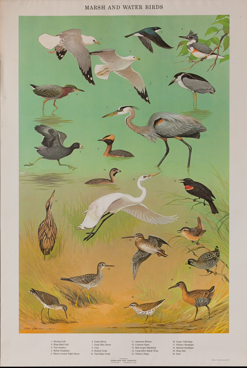 Marsh and Water Birds - Pennsylvania Game Commision Wildlife Poster