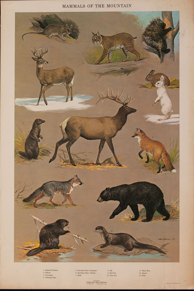 Mammals of the Mountain - Pennsylvania Game Commision Wildlife Poster