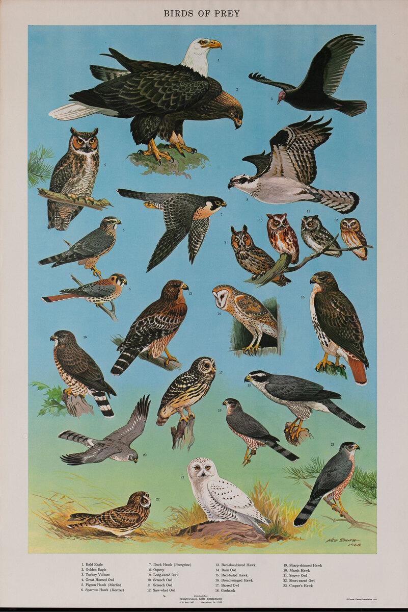 Birds of Prey - Pennsylvania Game Commision Wildlife Poster