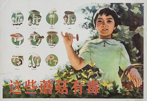 AAA Original Chinese Cultural Revolution Poster Edible Mushroom Chart