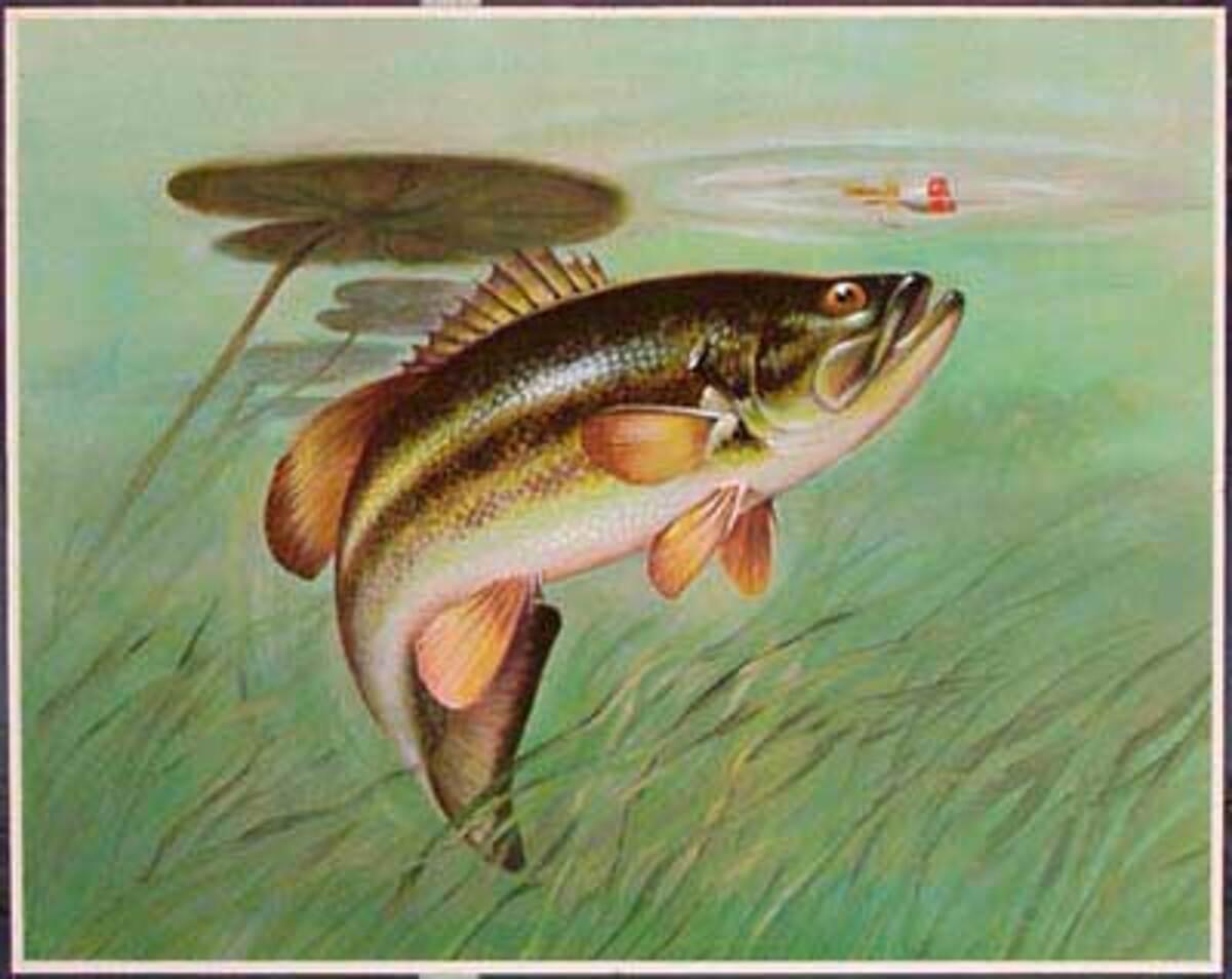 Original Flyfishing Print Lily Pad