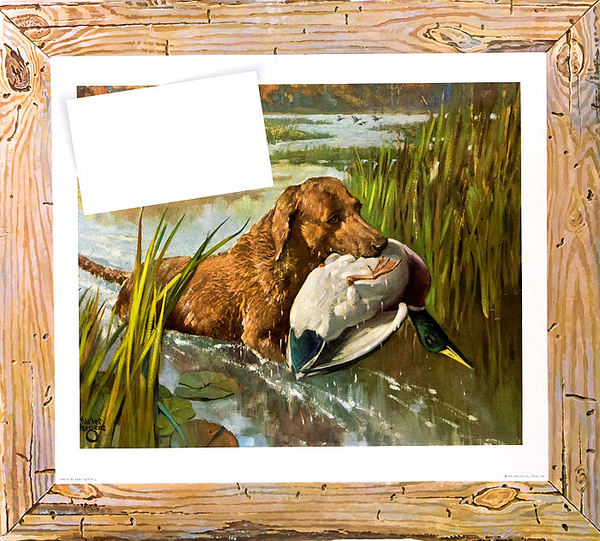 Retriever With Duck in Mouth Huge Original Press Sheet