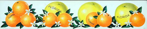 Florida Oranges and Graperfruits  Original American Advertising Poster white