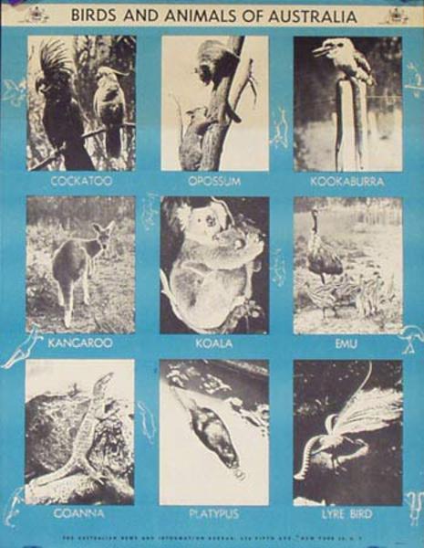 Birds and Aminals of Australia Original Poster