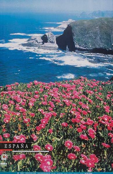 Original Spanish Travel Poster coastal flower photo