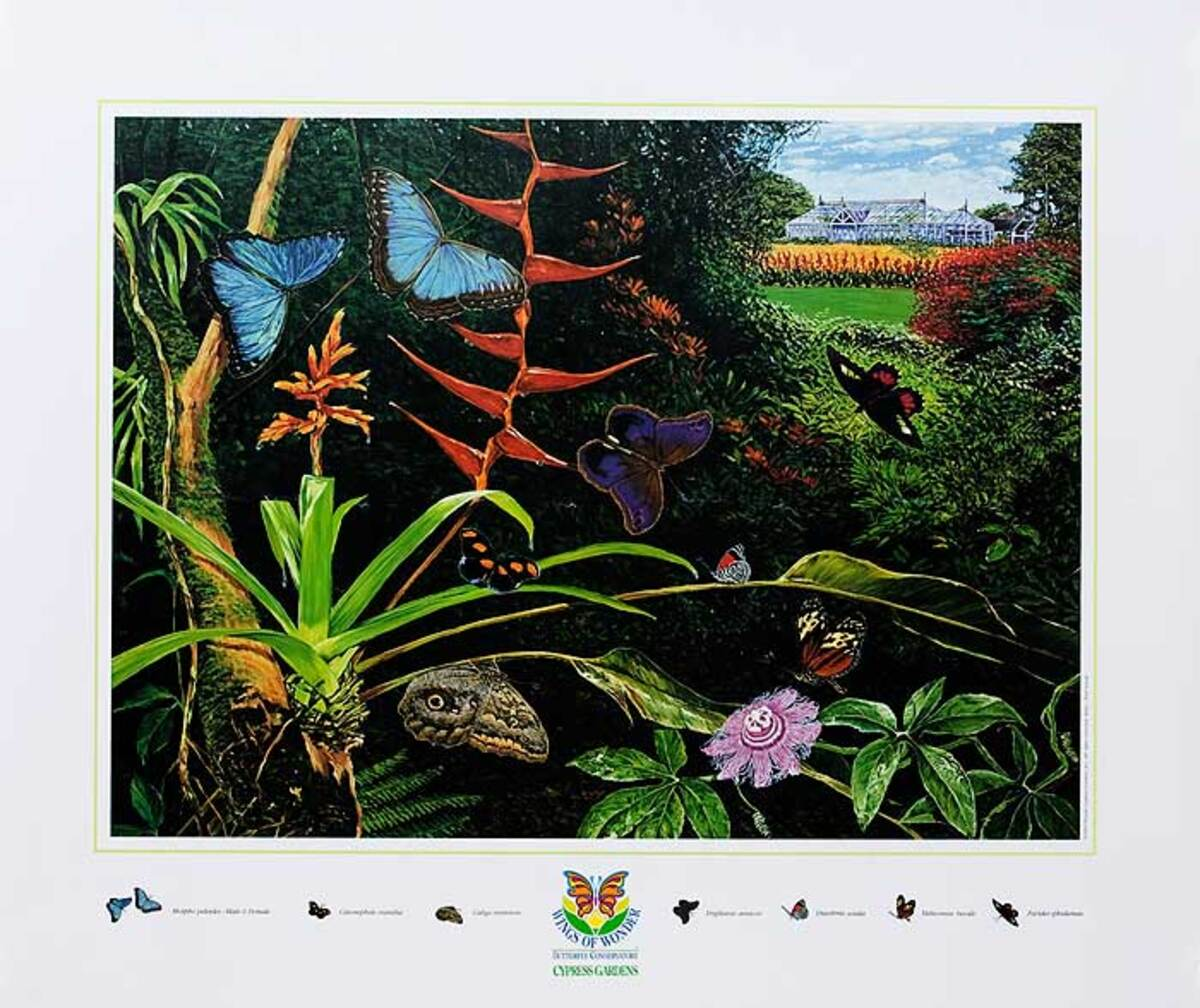 Wings of Wonder Cypress Gardens Florida Original Travel Poster