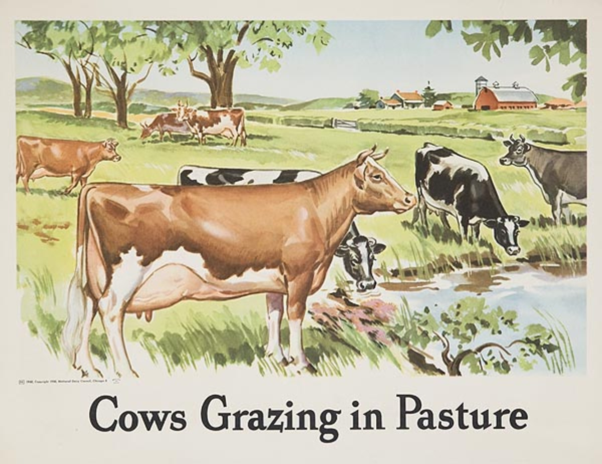 Cows Grazing in Pasture Original Dairy Council Promotional Poster