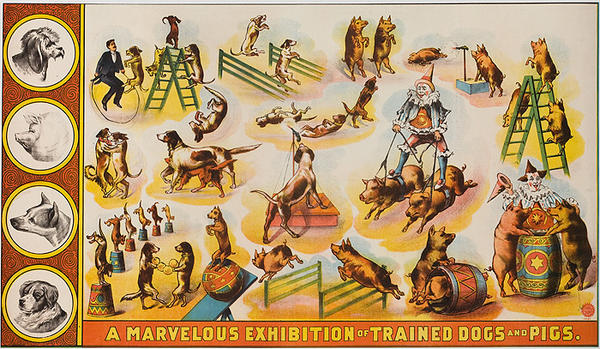 A Marvelous Exhibition of Trained Dogs and Pigs Original American Theater Poster
