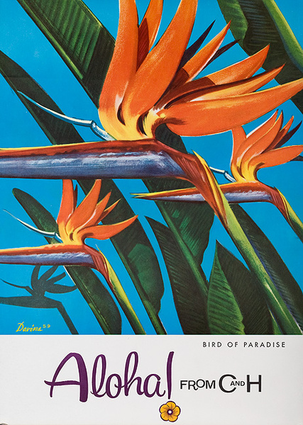 Aloha From  C & H Sugar Original American Advertising Poster Bird of Paradise