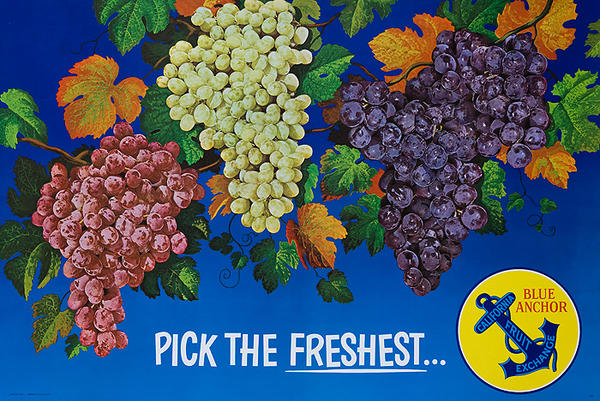 Pick the Freshest Blue Anchor California Grapes Advertising Poster