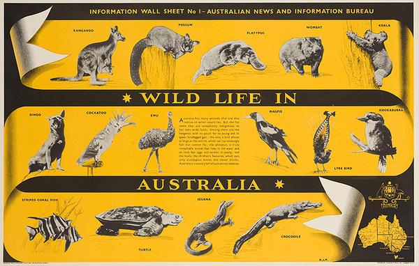 Wild Life in Australia Original Travel Poster