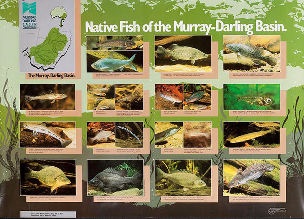 Native Fish of the Murray-Darling Basin Original Australian Travel Poster