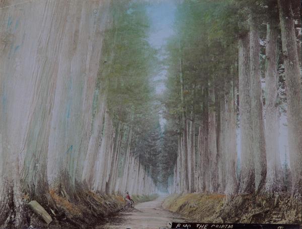 Meiji Era Hand Colored Japanese Albumen Photograph R40 The Criptm