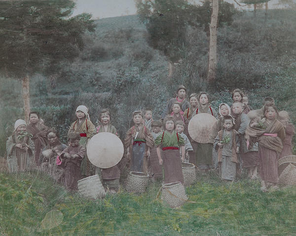 Meiji Era Hand Colored Japanese Albumen Photograph Tea Pickers